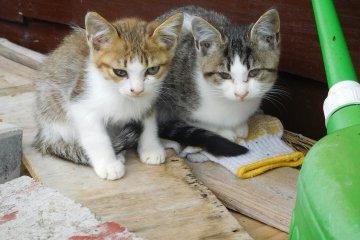 Exploring Japan's Cat Island