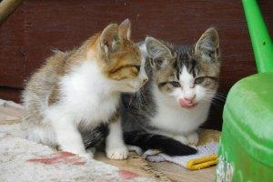 Mẹ và mèo con thư giãn
