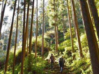 Caminata en el Bosque Kumano de camino a Oogumo Torigoe