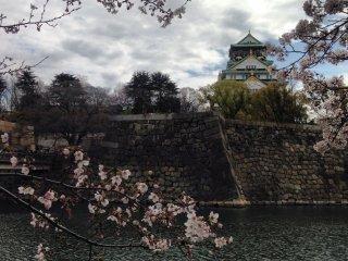 قلعة أوساكا في الربيع