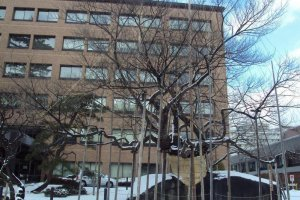 Ishiwarizakura đứng vững qua mùa đông. Hỗ trợ thêm giữ cho tuyết không làm tổn thương cây non.