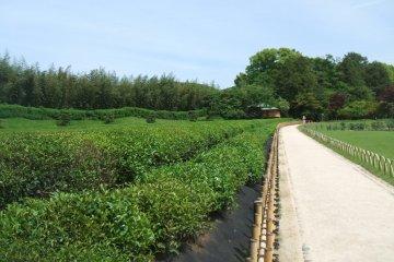 Korakuen Garden path