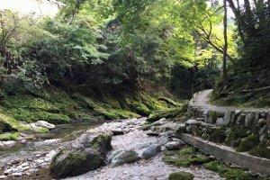 Kiri no mori's gorgeous scenery