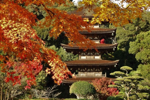 Rurikoji Temple is at its most beautiful in autumn