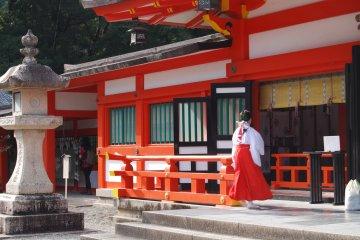 Shrine maiden rushes to work at Hayatama Shrine