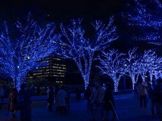 Những cái cây trong như các mạch máu xanh trên bầu trời đêm