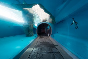 An underwater tunnel with a penguin swimming past