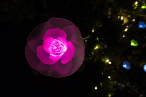 The beautiful rose lights