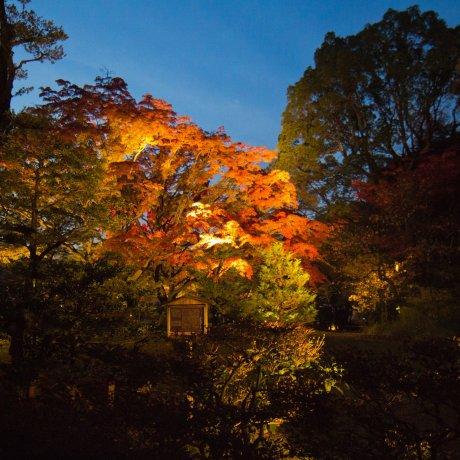 Illumination Automnale du Rikugi-en
