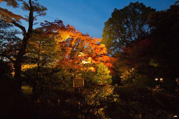 Segera setelah memasuki taman, Anda akan disapa oleh dedaunan musim gugur yang fantastis