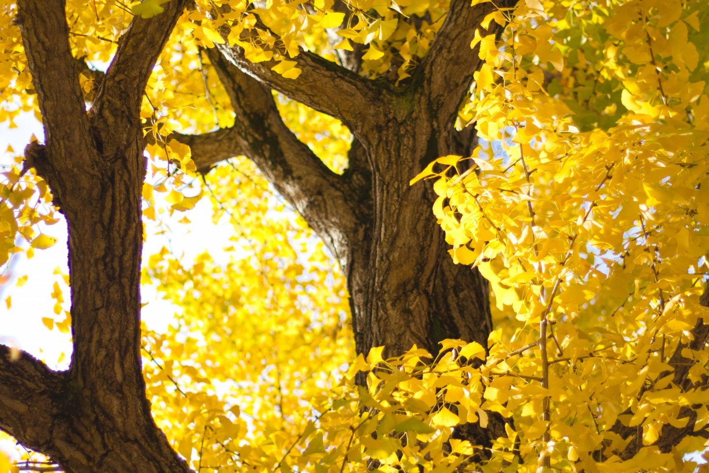 A closer look at the golden leaves
