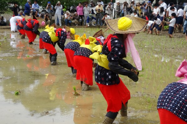 Costumed participants plant the year\'s first rice crop in Arao