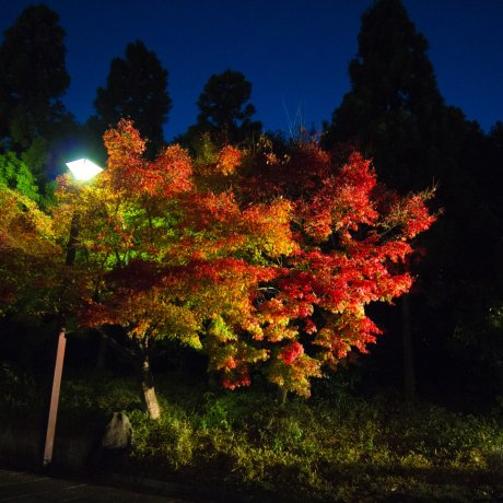 Les illuminations du Suzaku No Niwa