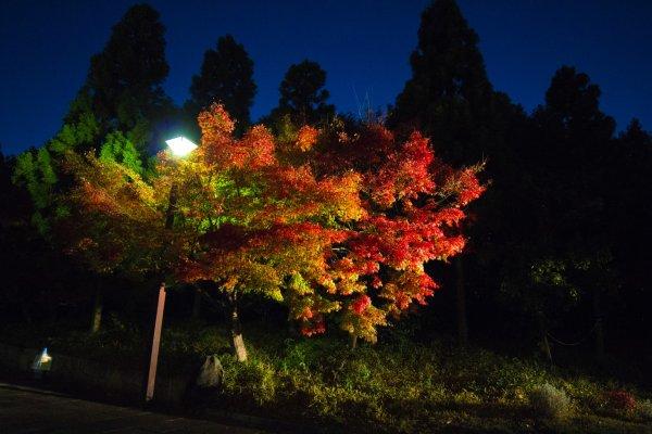 Les feuilles d\'automne rescellent de superbes couleurs à admirer