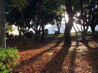 신선한 가을 어느 날