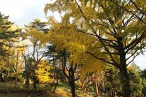 Taman Chiba di Musim Gugur