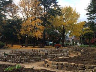 가을의 나뭇잎이 떨어진다
