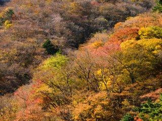 植物園を取り巻く山々も季節に染まる 11月