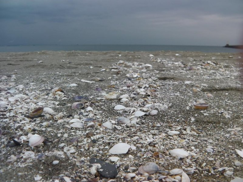 Uncrunched shells free of August's stampeding feet