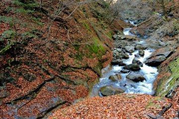 Река Фуэфуки - скалистый поток среди леса