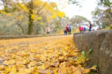 Листья золотых деревьев гингко по пути к руинам