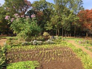 Le jardin à l'automne