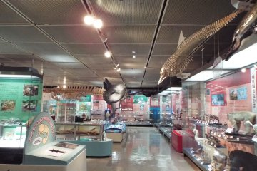 Natural History Section of Prefectural Museum