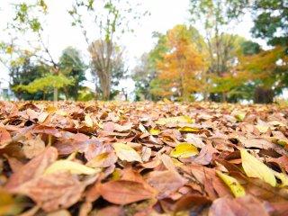 Autumn leaves to enjoy around the lake