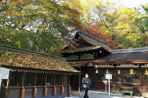 ศาลเจ้าคะวะอิตั้งอยู่ในป่าขนาดเล็กที่มีชื่อว่า ทะดะซุ-โนะ-โมะริ