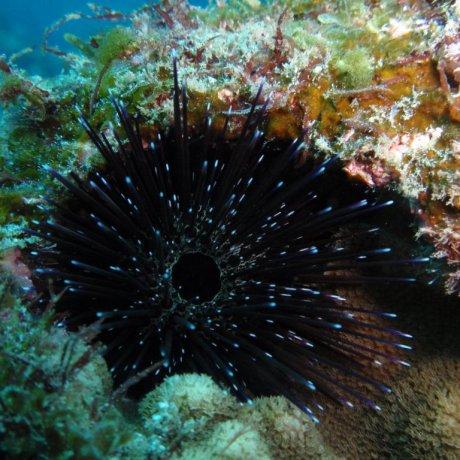 Scuba Diving in Hachijojima
