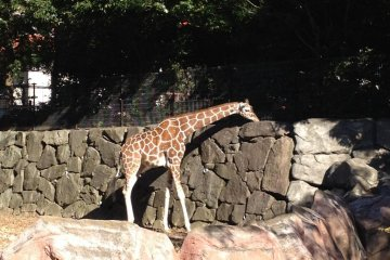Kanazawa Zoo In Yokohama
