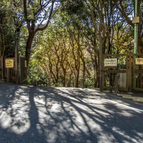 Kamakura's Sannzagaike Forest Park