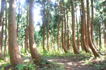 a magical stand of trees