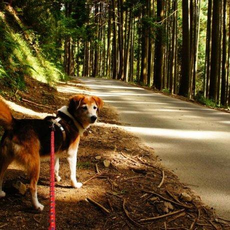My Weekend at Animal Refuge Kansai