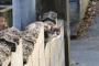 A Ilha dos Gatos de Tashirojima