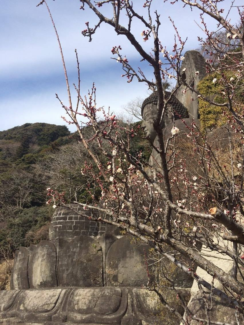 "Daibutsu or ""big buddha"" with plum blossoms in spring."