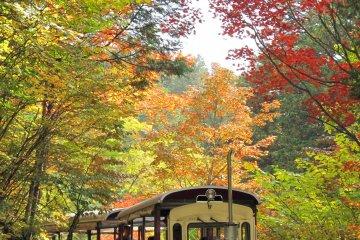 Akasawa Natural Forest