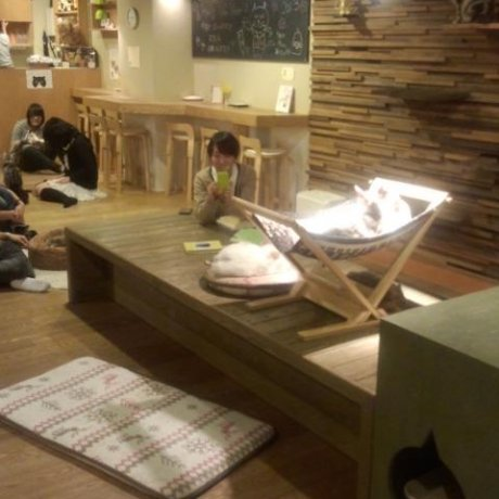 Neko no Jikan: Cat Cafe, Osaka City