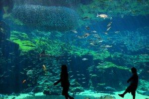 Aquarium de Kujukishima