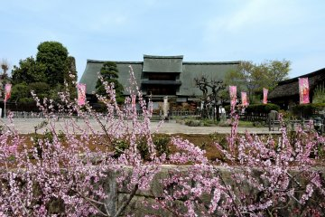 Rustic Spring Beauty in Enzan