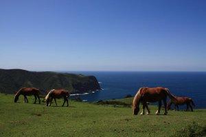 Horses on Oki Islands