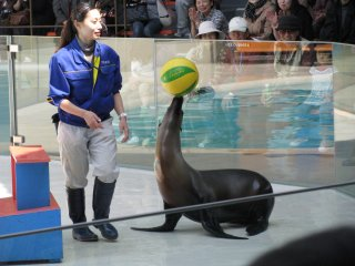 Sea lions are very smart