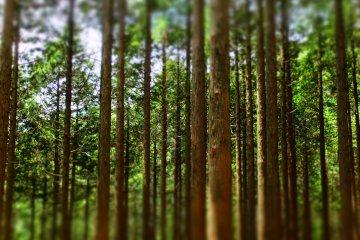 Một ngày thăm núi Kintoki