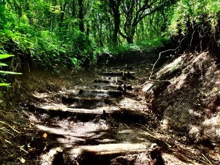 The hike is made of wooden steps, roots and terrain