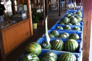 Lots of melons for sale in summer