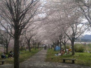Kongozan near Miyako