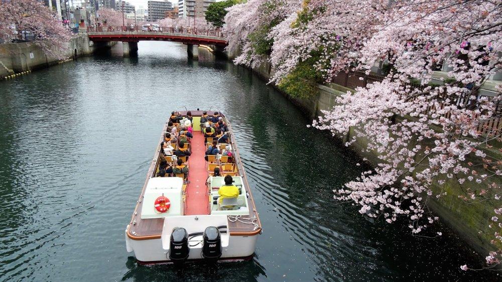 ในฤดูดอกซากุระจะมีบริการล่องเรือชมอยู่หลายแบบ