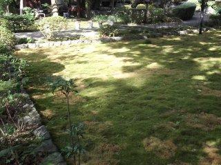 Part of the moss garden