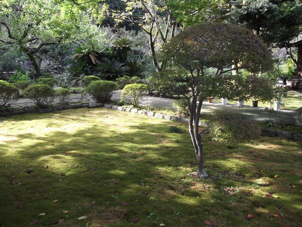 In the moss garden