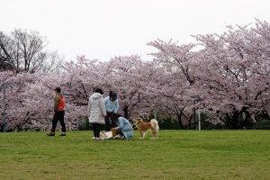 ชาวบ้านพาหมามาวิ่งเล่นเดินเล่น